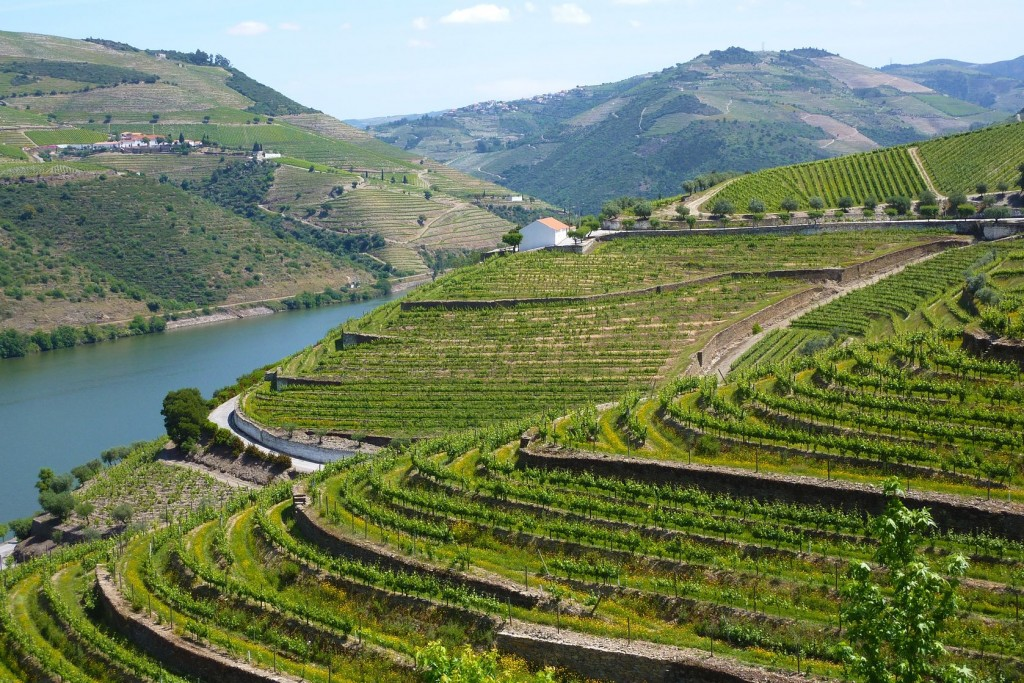 Douro Valley River Cruises