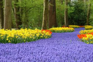 Tulips at Keukenhof Gardens on Springtime river cruises
