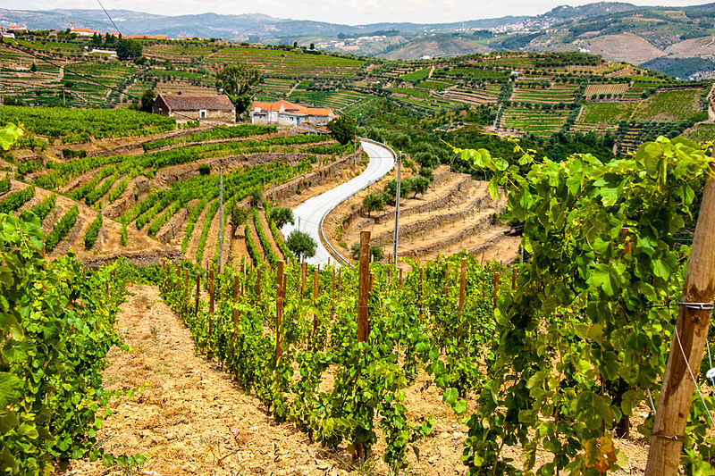 enjoy a luxury river tour through Portugal's wine region