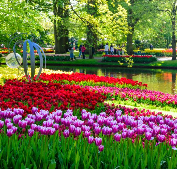 Dutch - Keukenhof park in Netherlands,