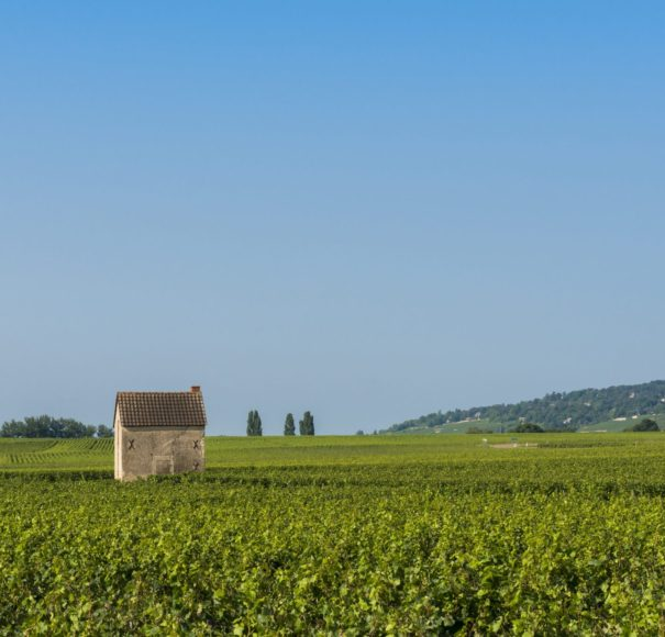 Rhone - Vineyard at Beaune with small vineyard house, France.
