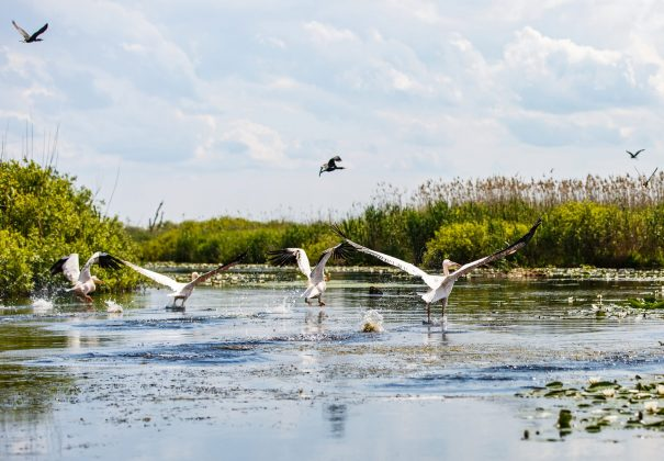 Day 3 - Saint George - Danube Delta