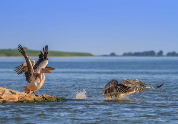 Day 7 - Danube Delta