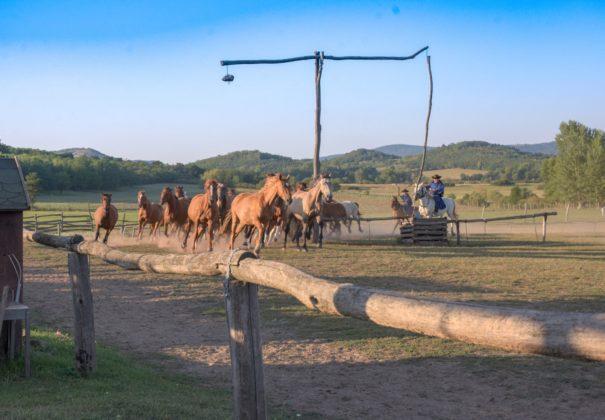 Day 8 - Kalocsa, Hungary