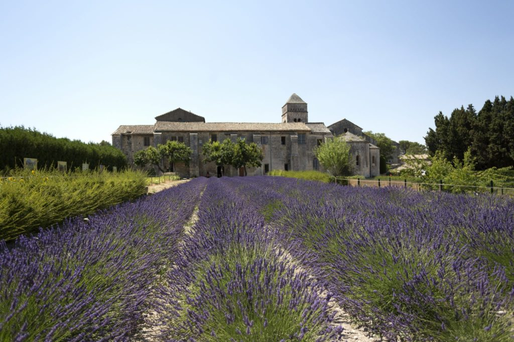 Rhone - Lavender-Garden-of-the-Hospital-in-ArlesLowRes