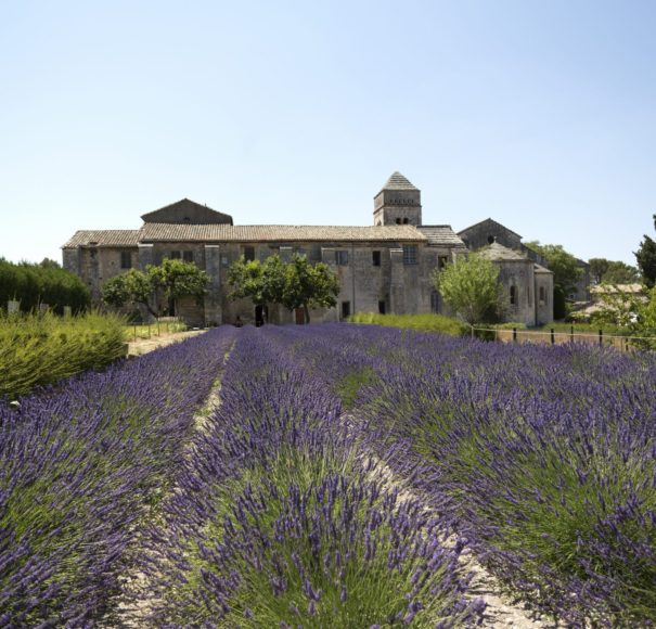 Rhone - Lavender-Garden-of-the-Hospital-in-ArlesLowRes