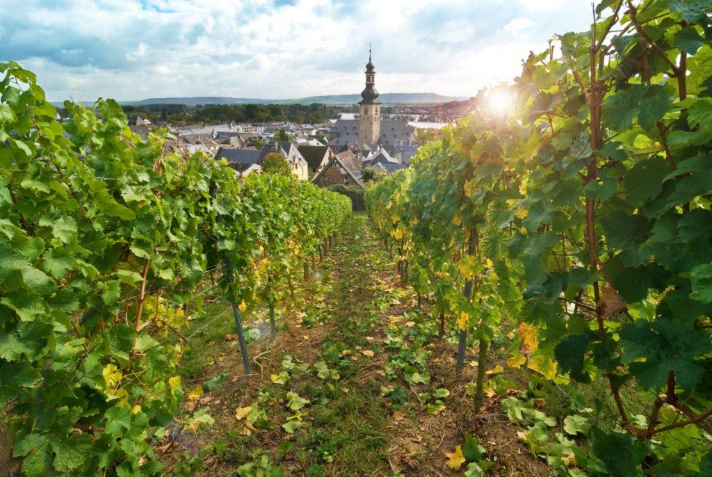Titan Travel River Cruise Rhine Rudesheim and vineyards