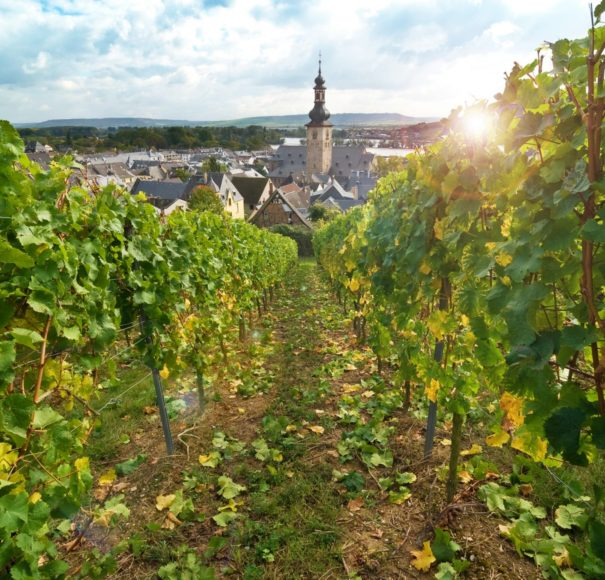 Titan Travel River Cruise Rhine Rudesheim and vineyards