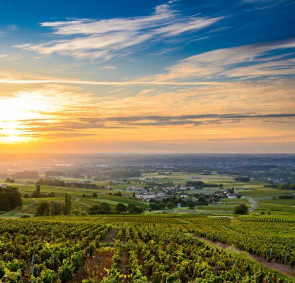 APT Cruise Rhone Sunrise at Beaujolais vineyard
