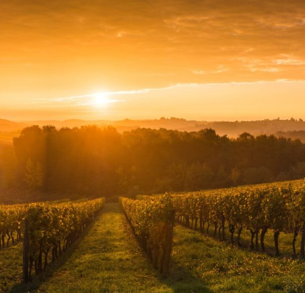 Taste of Bordeaux river cruise. Vineyard-Sunrise,-Bordeaux-Vineyard,-FranceLowRes