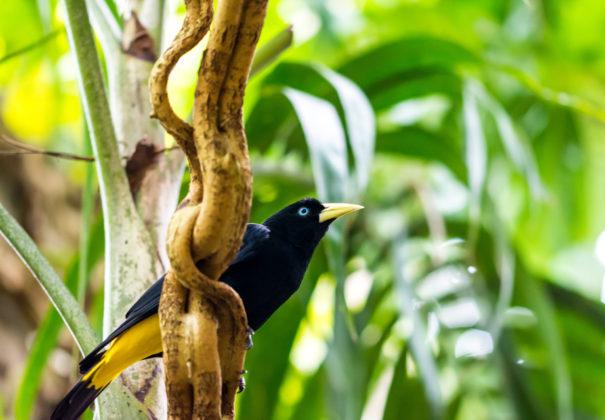 Day 5 - Samiria River, Nauta Cano (Amazonian Natural Park)