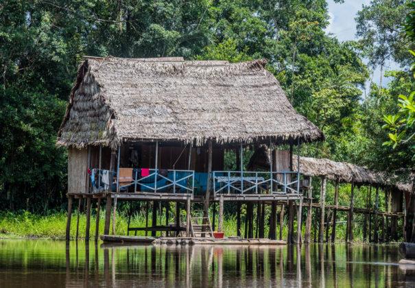 Day 7 -   Ucayali River, Pacaya River